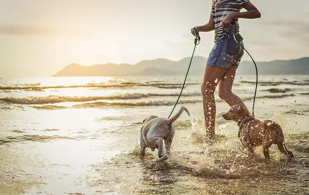 Young woman running on a beach with two dogs
